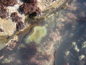 Sea Anemone, like where Nemo lives