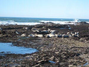These are some of the seals we saw there.