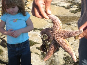 This was one of the biggest starfish I have ever seen